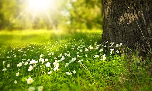 Våren är här!  Ladda inför vår och sol