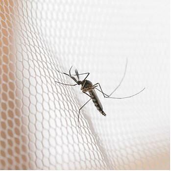 Myggnät – måttanpassande insektsskydd frisk luft utan besvärliga insekter