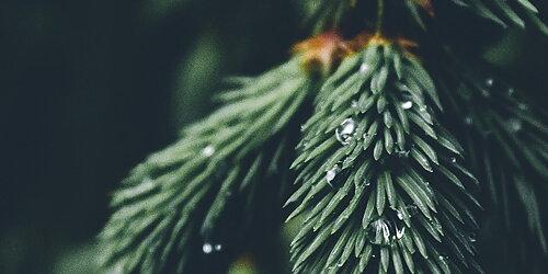 Jullåtar