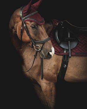 Hästen  Allt till våra pälsklingar