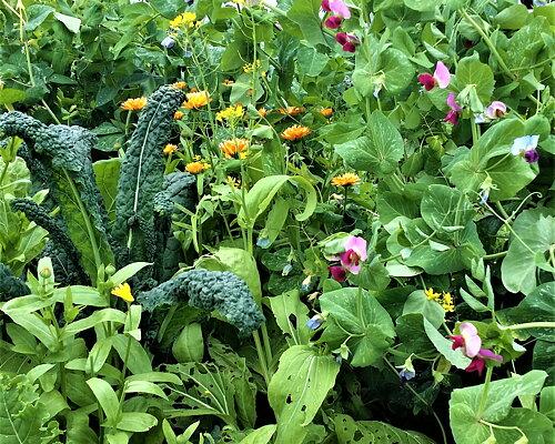 Våra odlingar Basen i våra naturprodukter