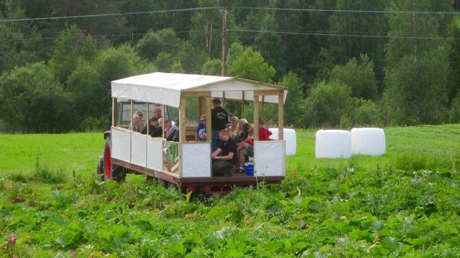 Rabarbersafari - safari med traktoro vagn