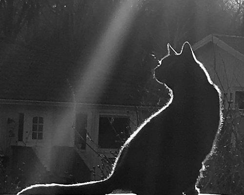 Katter & Hundar