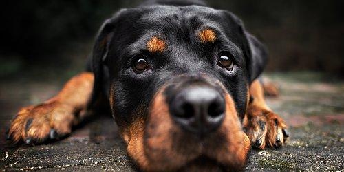 NoseWork Öka hundens självförtroende & ert samarbete!