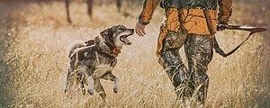 Välkommen till oss på Pointer Jakt Jaktbutiken på nätet med pejlar, licenser och mycket mer Vi gör din jakt enklare