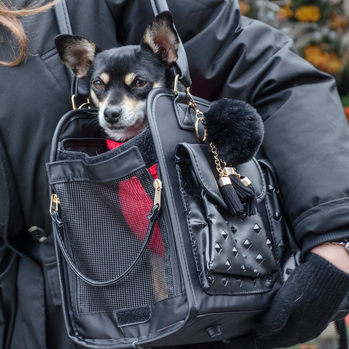 DOG CARRIER