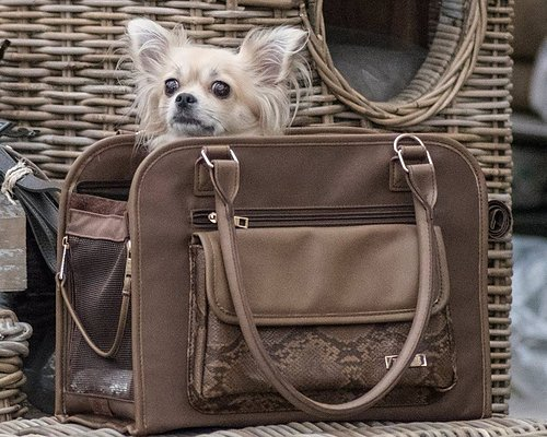 DOG CARRIER BAGS ARKEEN & REISSUUN