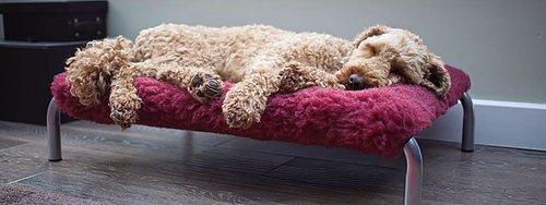 HiK9 Upphöjda hundsängar Sängar på ben med tillbehör